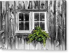 Going Green Acrylic Print