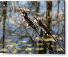 Acrylic Print featuring the photograph Going To Seed by Odd Jeppesen