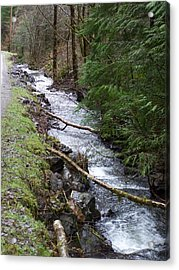 Going Upstream Acrylic Print by Laurie Kidd