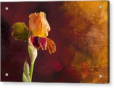 Gold And Red Iris Acrylic Print
