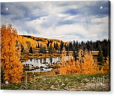 Gold Aspen On The Mesa Acrylic Print