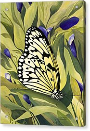 Gold Butterfly In Branson Acrylic Print