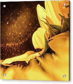 Gold Dust 2 - Acrylic Print