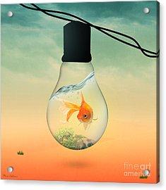 Gold Fish 4 Acrylic Print by Mark Ashkenazi