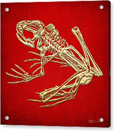 Gold Frog Skeleton On Red Leather Acrylic Print