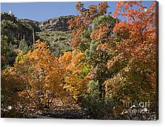 Gold In The Mountains Acrylic Print by Melany Sarafis