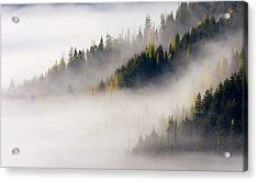 Gold In Them Hills Acrylic Print