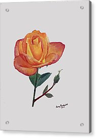 Gold Medal Rose Acrylic Print