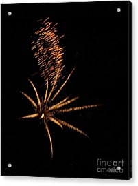 Gold Star Tail Acrylic Print by Norman Andrus