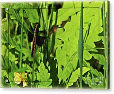Acrylic Print featuring the photograph Gold Striped Dragron by Deborah Johnson