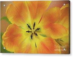 Gold Tulip Explosion Acrylic Print