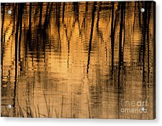 Golden Abstract Acrylic Print by Shevin Childers