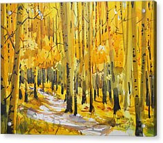 Golden Aspens Acrylic Print by Spencer Meagher