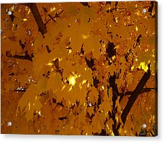 Golden Autumn Acrylic Print by Stephen Davis