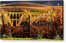 Golden Autumn Vineyard Acrylic Print