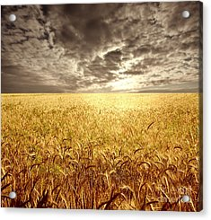 Golden Beautiful Wheat Farm Acrylic Print by Boon Mee