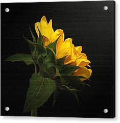 Acrylic Print featuring the photograph Golden Beauty by Judy Vincent