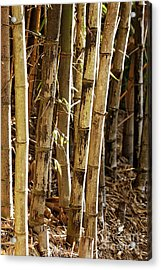 Acrylic Print featuring the photograph Golden Canes by Linda Lees