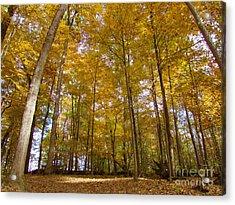Golden Canopy Acrylic Print