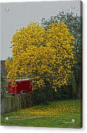 Golden  Acrylic Print by Chauncy Holmes