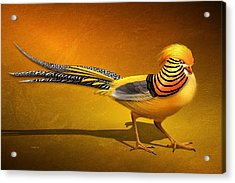Golden Chinese Pheasant Acrylic Print