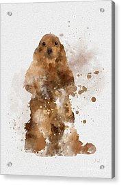 Golden Cocker Spaniel Acrylic Print by Rebecca Jenkins