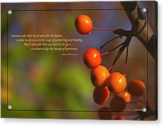Golden Crab Apples In The Sun Acrylic Print by Mick Anderson