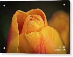 Acrylic Print featuring the photograph Golden by Craig Leaper