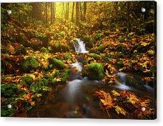 Golden Creek Cascade Acrylic Print