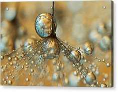Golden Dandy Shower Acrylic Print