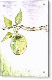 Golden Delishous Apple Acrylic Print by Teresa White