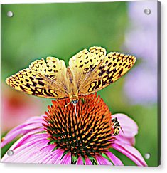 Golden  Acrylic Print by Don Wright