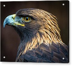Golden Eagle 2 Acrylic Print