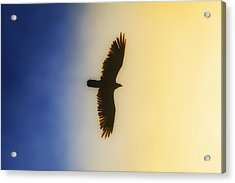 Golden Eagle Over Friday Harbor Acrylic Print