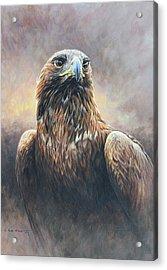 Golden Eagle Portrait Acrylic Print