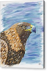 Golden Eagle Acrylic Print by Scott Wilmot