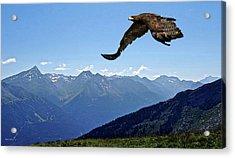 Golden Eagle Acrylic Print by Thomas Pollart