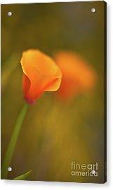 Golden Edges Acrylic Print