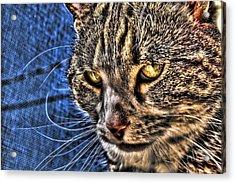 Golden Eyes Acrylic Print by Joetta West