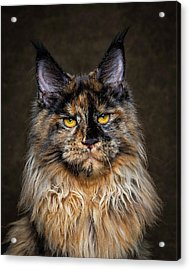 Golden Eyes Acrylic Print