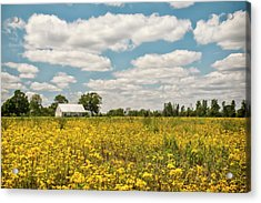 Golden Farmland Acrylic Print