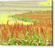 Golden Field In Dry Brush Acrylic Print by James Granberry