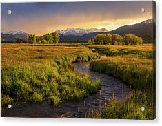 Golden Field In Heber Valley. Acrylic Print