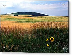 Golden Fields Forever Acrylic Print by Kathy Yates