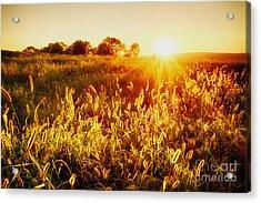 Golden Fields Acrylic Print by Mark Miller