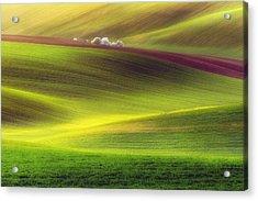 Golden Fields Acrylic Print by Piotr Krol (bax)