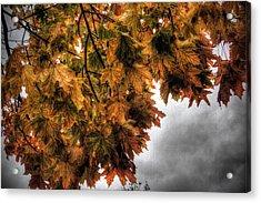 Golden Foliage  Acrylic Print