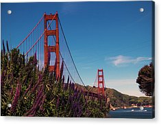 Golden Gate  Acrylic Print by Brendan Quinn