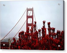 Golden Gate Bridge Red Flowers Acrylic Print