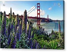 Golden Gate Flowers Acrylic Print